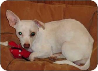 Dachshund Mix Dog for adoption in Manahawkin, New Jersey - Princess