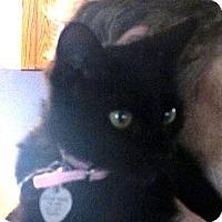 Adopt A Pet :: Peppermint Patty - Palm City, FL