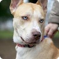 Adopt A Pet :: Frankie (Blue Eyes) - Mt Gretna, PA