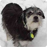 Adopt A Pet :: Jazzy - Arlington, TX