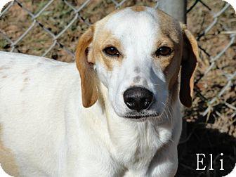 Cocker Spaniel/Terrier (Unknown Type, Medium) Mix Dog for adoption in Ozark, Alabama - Eli