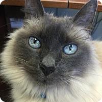 Adopt A Pet :: Skylar - Davis, CA