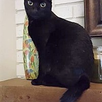 Adopt A Pet :: Blanche - Orlando, FL