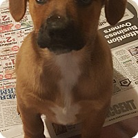 Adopt A Pet :: Shepherd Puppies - 2 males - LaGrange, OH