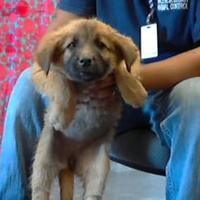 Shepherd (Unknown Type) Mix Dog for adoption in Los Lunas, New Mexico - 35512252
