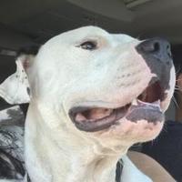 Adopt A Pet :: Dancer - IN TRAINING - Coldwater, MI