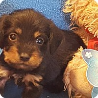 Adopt A Pet :: Chase - Vacaville, CA