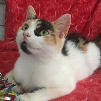 Adopt A Pet :: Flora - Bloomsburg, PA