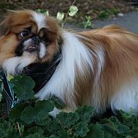 Adopt A Pet :: Ezra - Sioux Falls, SD