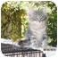 Photo 1 - Domestic Mediumhair Kitten for adoption in Los Angeles, California - Squeakie