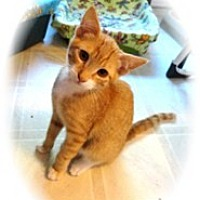 Adopt A Pet :: Morrie - Shelton, WA