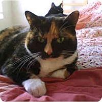 Adopt A Pet :: ChaChee - Scottsdale, AZ
