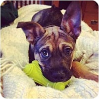Adopt A Pet :: Jake - Needs foster or adopter - Vancouver, BC