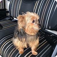 Adopt A Pet :: Smokey - Tallahassee, FL