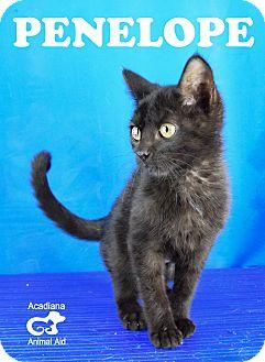 Domestic Shorthair Kitten for adoption in Carencro, Louisiana - Penelope