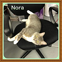 Adopt A Pet :: Nora - Atco, NJ