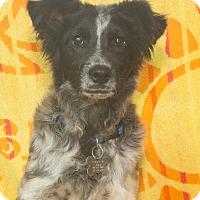 Adopt A Pet :: Tramp - Elmwood Park, NJ
