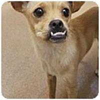 Adopt A Pet :: Peanut - Beverly Hills, CA