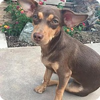 Adopt A Pet :: Allie - Temecula, CA