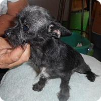 Adopt A Pet :: 4Paws - Yucaipa, CA