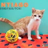 Adopt A Pet :: TCR 1 - San Angelo, TX