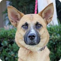Adopt A Pet :: Glycine - San Diego, CA