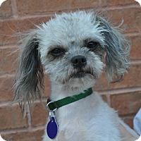 Adopt A Pet :: Tom - Atlanta, GA