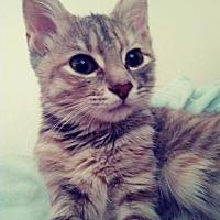 Adopt A Pet :: Millie - Covington, KY