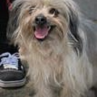 Adopt A Pet :: Luna - Canyon Country, CA