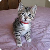 Adopt A Pet :: Cullen - Eagan, MN