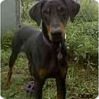 Adopt A Pet :: Grady--adopted! - New Richmond, OH