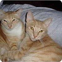 Adopt A Pet :: Cinnamon and Bailey - New Port Richey, FL
