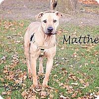 Adopt A Pet :: Matthew - Chicago, IL