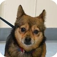 Adopt A Pet :: Aidan - Mahopac, NY