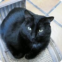 Adopt A Pet :: Middie - Northbrook, IL