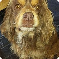 Adopt A Pet :: Mariah - Sugarland, TX