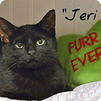 Adopt A Pet :: Jeri - Ocean City, NJ