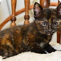 Adopt A Pet :: Sweet Katie Lee - Davis, CA
