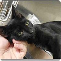 Adopt A Pet :: Jinx - Monroe, NC