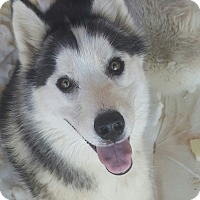 Adopt A Pet :: Darrika - Apple valley, CA