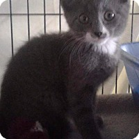 Adopt A Pet :: Crumpet - Freeport, NY