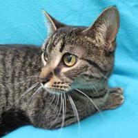 Adopt A Pet :: Mali - Port Charlotte, FL