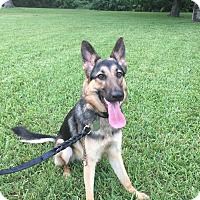 Adopt A Pet :: Roxy - Ormond Beach, FL