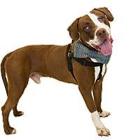 Adopt A Pet :: Kyle - St. Cloud, FL