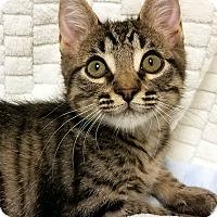 Adopt A Pet :: Timothy- RC Petsmart - Rancho Cucamonga, CA