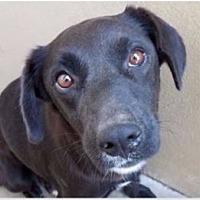Adopt A Pet :: JANE - Red Bluff, CA