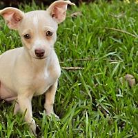 Adopt A Pet :: Marge - San Antonio, TX