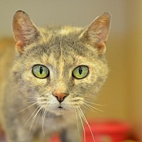 Adopt A Pet :: Emmy - Philadelphia, PA