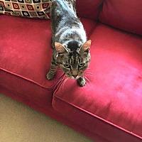 Adopt A Pet :: Chloe - Central Islip, NY