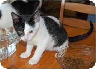 Domestic Shorthair Cat for adoption in Woodstock, Georgia - Rita